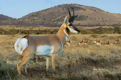 Wildlife Art - Pronghorn Antelope Poster by Dale Kunkel Art