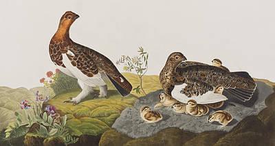 Willow Grouse Or Large Ptarmigan Poster by John James Audubon