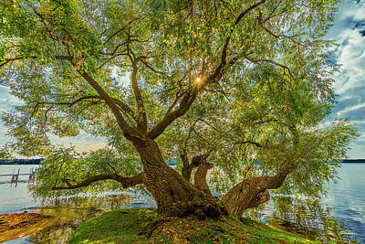 Willow Tree - Lake Geneva Wisconsin Poster by Bruce Thompson