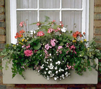 Window Box Of Mixed Flowers Poster by Elaine Plesser