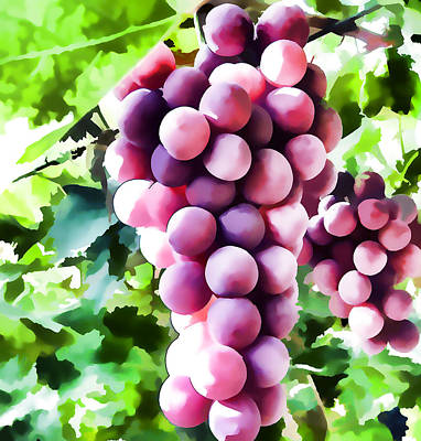 Wine Grapes On The Vine Poster by Lanjee Chee