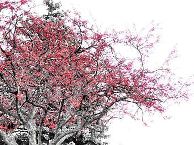 Winter Berries Poster by Scott Hovind