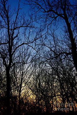Winter Crescent Moon Poster by Karen Adams