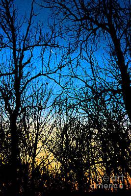 Winter Crescent Moon Painted Poster by Karen Adams