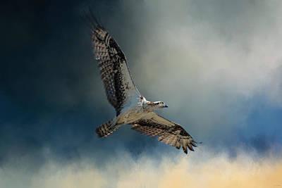 Winter Osprey Poster by Jai Johnson