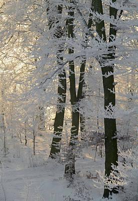 Winter Sun Poster by Odd Jeppesen