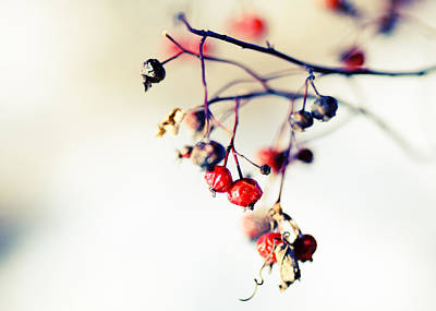 Winter's Berries Poster by Todd Klassy