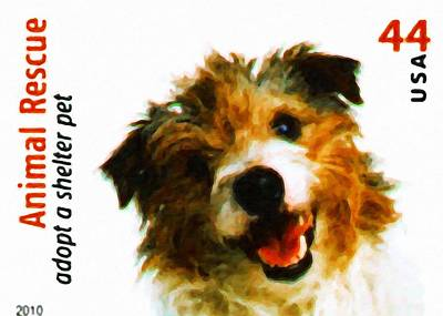 Wire-haired Jack Russell Terrier Poster by Lanjee Chee
