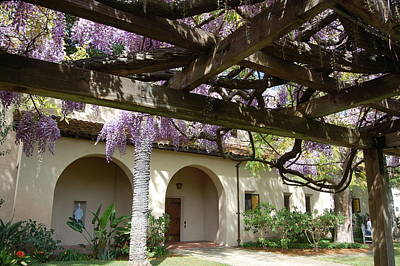 Wisteria Arbor Poster by Carolyn Donnell