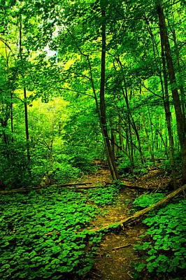 Woodland Way Poster by Phil Koch