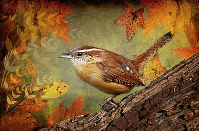 Wren In Autumn  Poster by Bonnie Barry
