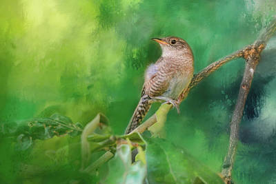 Wren In The Garden Bird Art Poster by Jai Johnson