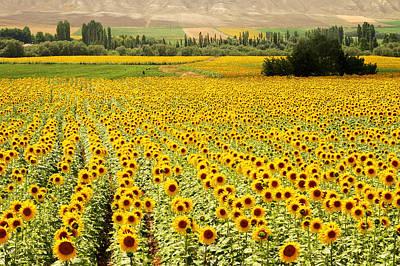 Yellow Fields Poster by Kobby Dagan