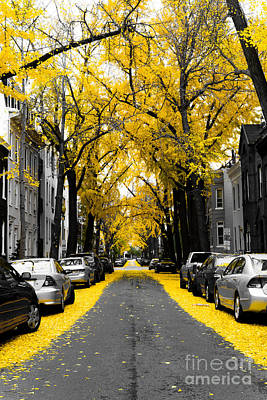 Yellow Gingko Trees In Washington Dc Poster by Paul Frederiksen