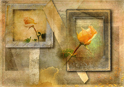 Yellow Rose Poster by Phil Clark