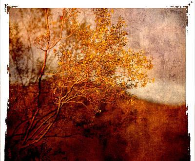 Yellow Tree Poster by Susanne Van Hulst