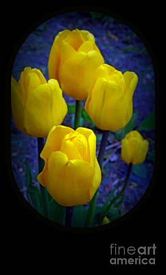 Yellow Tulips Poster by Kay Novy