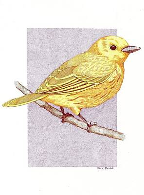Yellow Warbler Poster by Jack Puglisi