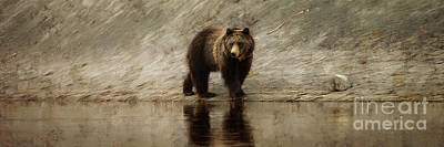 Yellowstone Grizzly Poster by Wildlife Fine Art