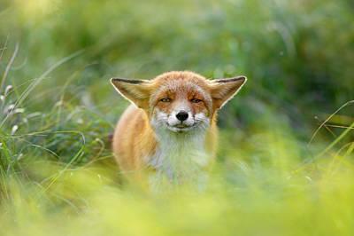 Yoda - Funny Fox II Poster by Roeselien Raimond