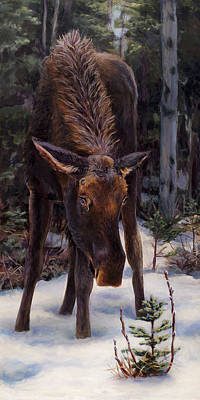 Young Moose And Pussy Willows Springtime In Alaska Wildlife Painting Poster by Karen Whitworth