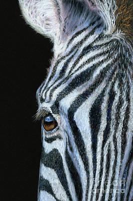 Zebra Detail Poster by Sarah Batalka