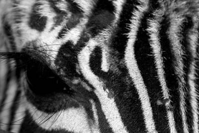 Zebra Eye Poster by Dana  Oliver