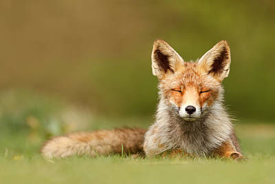 Zen Fox Series - Born To Be Happy Poster by Roeselien Raimond