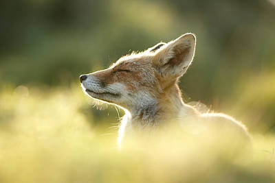 Zen Fox Series - Zen Fox Up Close Poster by Roeselien Raimond