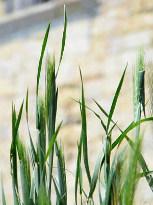 Zen Grass Poster by Dagmar Ceki