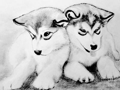 Siberian Husky Drawing - # 10 Siberian Husky Puppies by Alan Armstrong