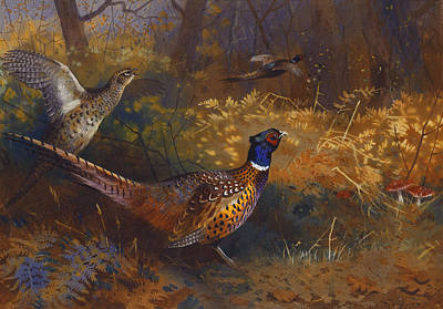 Gamebird Painting -  A Cock And Hen Pheasant At The Edge Of A Wood by Archibald Thorburn