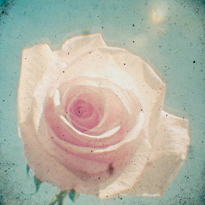 Cassia Photograph -  A Rose By Any Other Name by Cassia Beck