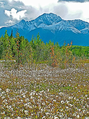 Arctic Cotton Along Cassiar Highway-british Columbia Print by Ruth Hager