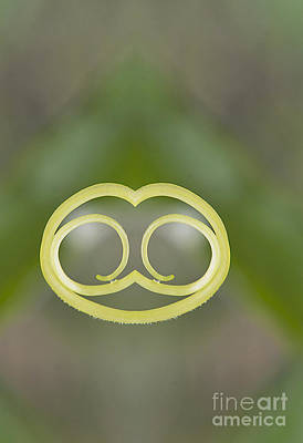 Background With Cucumber Tendril Face Print by Odon Czintos
