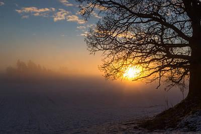 Sunbeams Pour Through The Tree At The Misty Winter Sunrise Print by Aldona Pivoriene