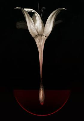 Manipulation Photograph -  Bleeding Lily by Johan Lilja
