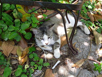 Cat Resting Under Bench Print by Trudy Brodkin Storace