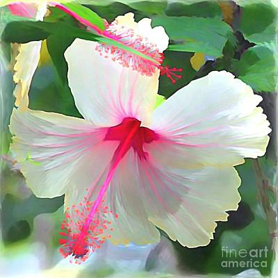 Delicate Beauty Hibiscus Print by Peggy  Franz
