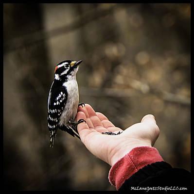 Downy Woodpecker In Hand Print by LeeAnn McLaneGoetz McLaneGoetzStudioLLCcom