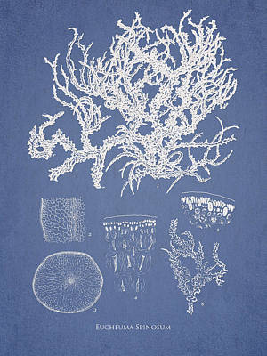 Algae Drawing -  Eucheuma Spinosum by Aged Pixel
