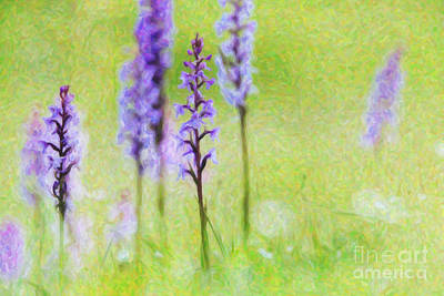 Friendly Digital Art -  Fragrant Orchids by Tim Gainey
