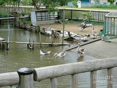 Japanese Geese Print by Evgeny Pisarev
