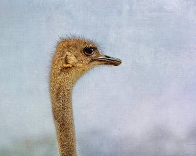 Ostrich Digital Art -  On The Lookout by Terry Fleckney