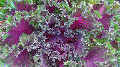 Cabbage Mixed Media -  Ornamental Kale by Dennis Dugan