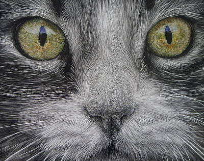 Scratchboard Painting -  Scaredy Cat by Lesley Barrett