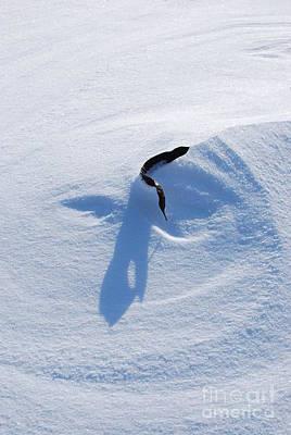 Joy Dinardo Bradley Dinardo Designs Photograph -  Snow Face by Joy Bradley