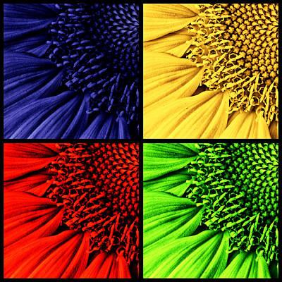 Sunflowers Photograph -  Sunflower Medley by Mark Kiver