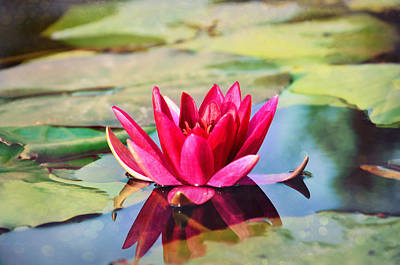 Water Lily Original by Gynt