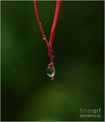 Waterdrop Print by Michelle Meenawong